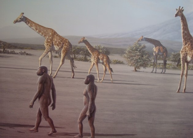 the-drawings-of-early-humans-walking-in-laetoli-area