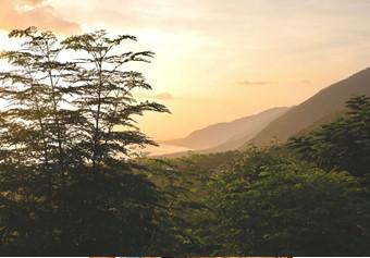 timberland eco