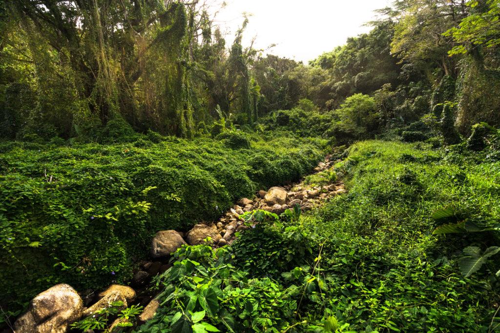 hike to manoa falls