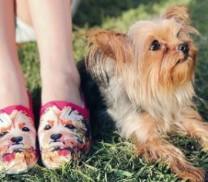 bobs dog and skechers shoes