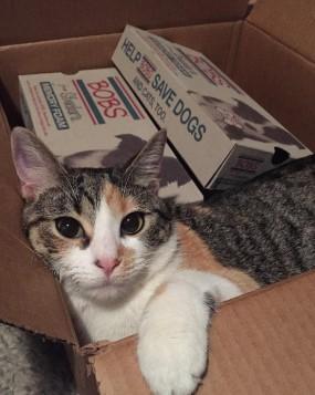 cat in bobs box