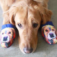 bobs dog paws