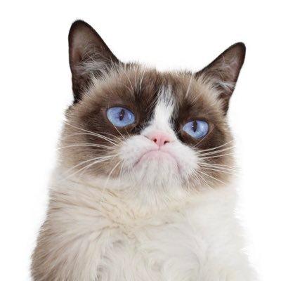 grumpy cat bobs