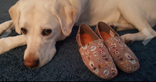 lab and bobs skechers