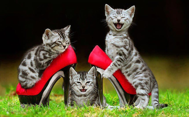 laughing cats in heels