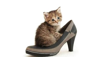 puss in shoe